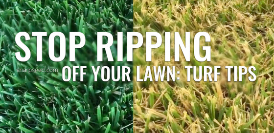 Stop Ripping Off Your Lawn: Turf Tips for Cool Season Grass