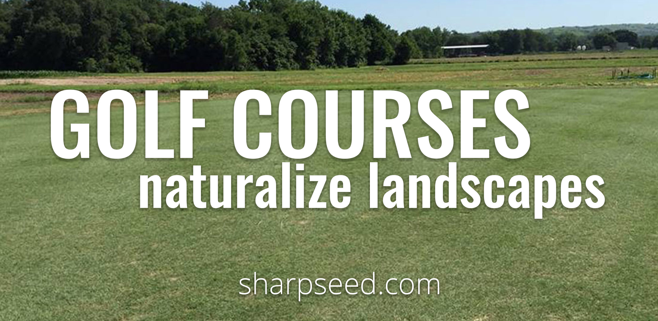 Adding Native Grasses to Golf Courses is a Gimme