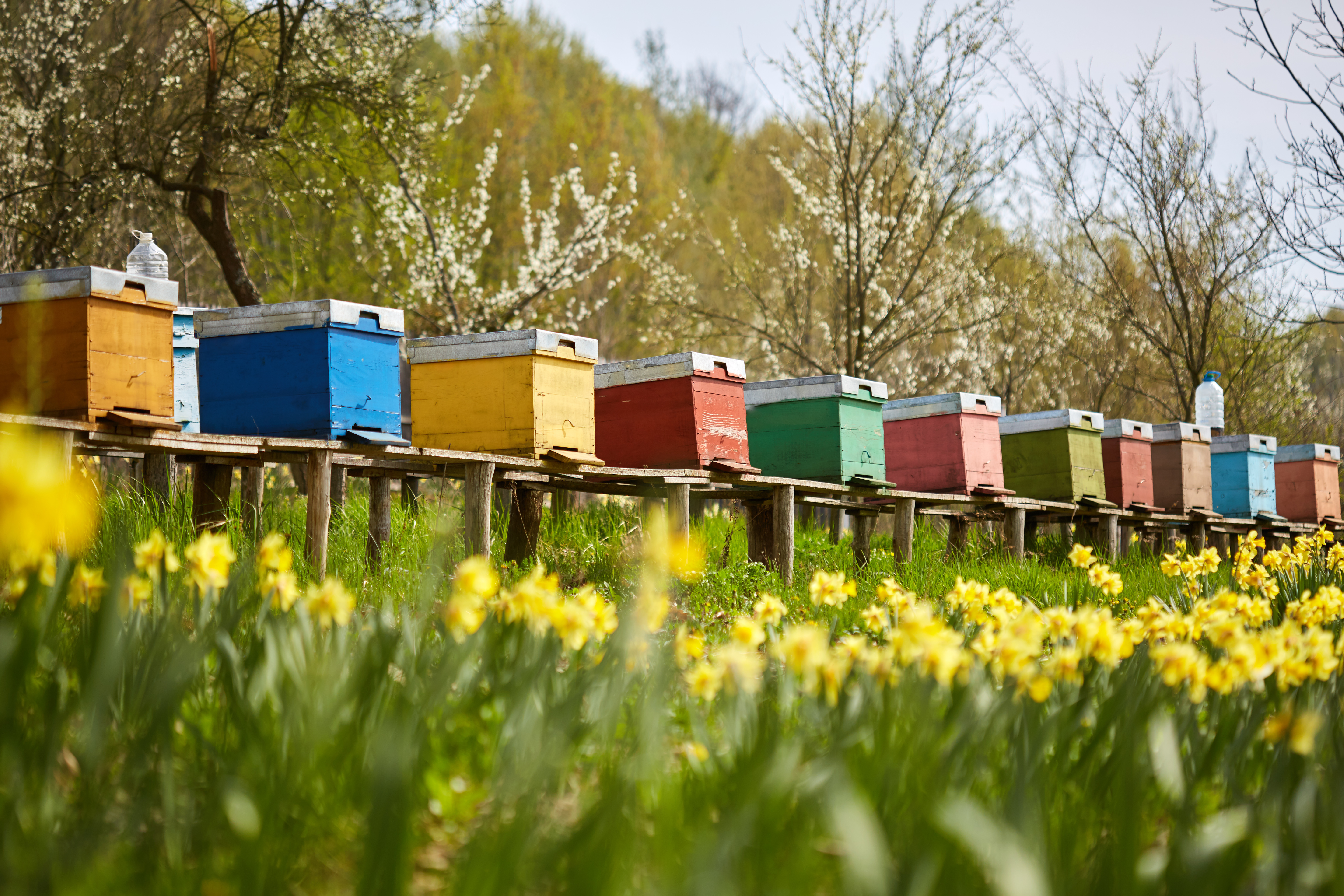 colorful-row-of-hives.jpg