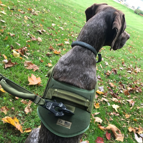 Hi Consumption: T3 Navy Seal K9 Quick Harness & Patrol Lead