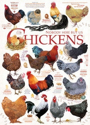 Chicken Quotes, 1000pc