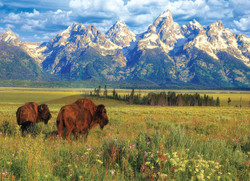 Grand Teton National Park, 1000pc