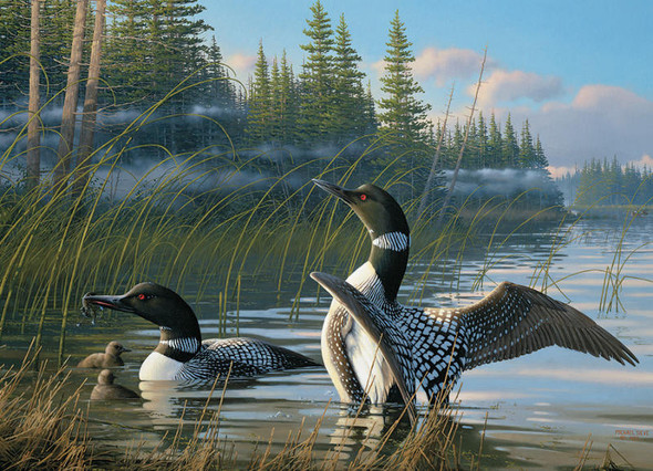 Common Loons, 1000pc