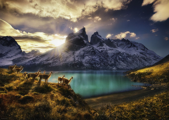 This puzzle displays a majestic scene featuring a group of llamas standing on a ridge overlooking a brilliant bluish-green lake illuminated by the days final rays of sunshine.