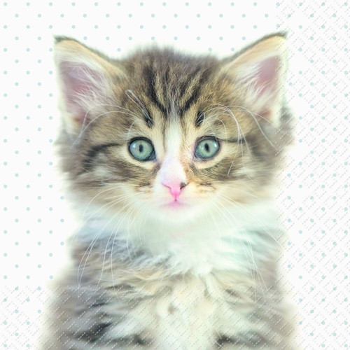 4 Single Lunch Paper Napkins for Decoupage  - Sweet Kitten Hi