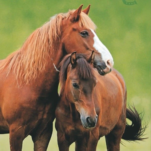 4 Single Lunch Paper Napkins for Decoupage  -Two Horses
