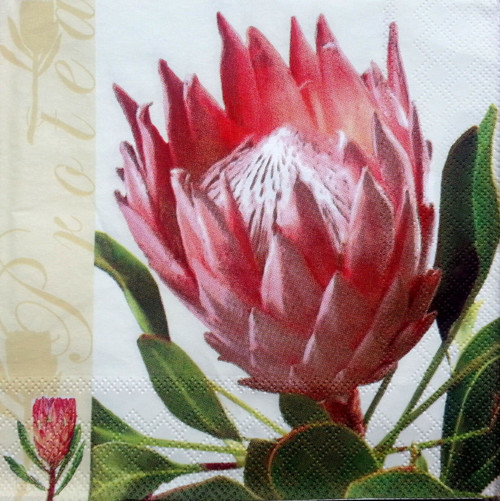 4 Lunch Paper Napkins for Decoupage Party Table -Royal Flower, Flowers