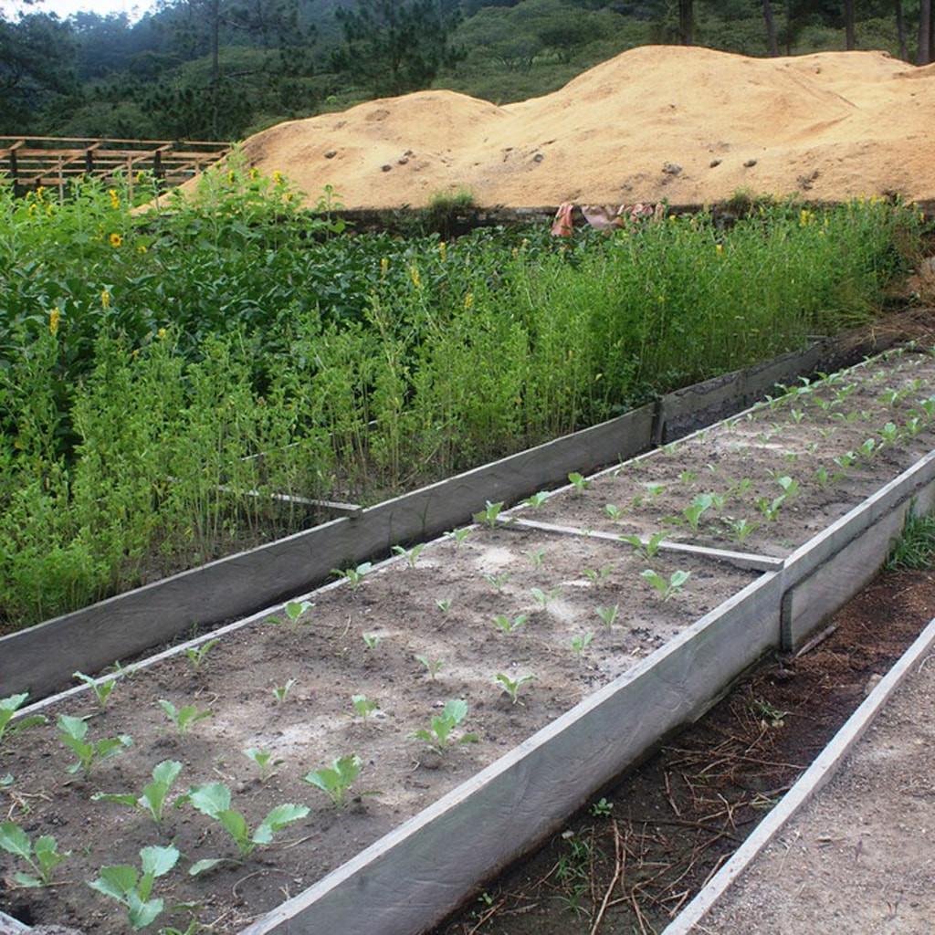 Garden beds on the organic farm in Honduras.