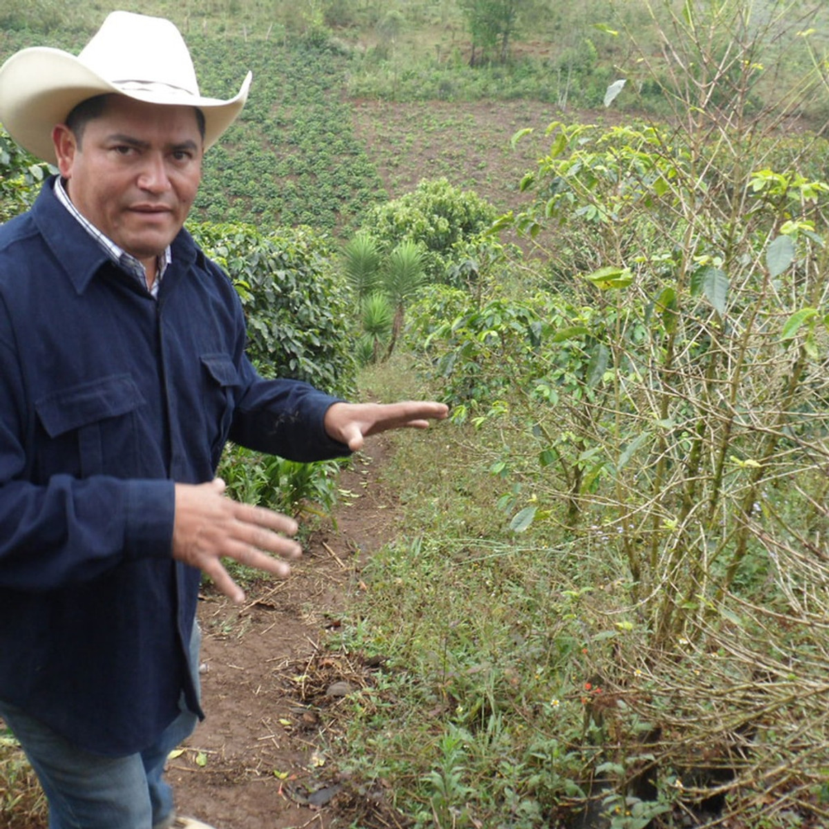 COMSA coffee farmer who is passionate about soil ecology and the microorganisms that support life