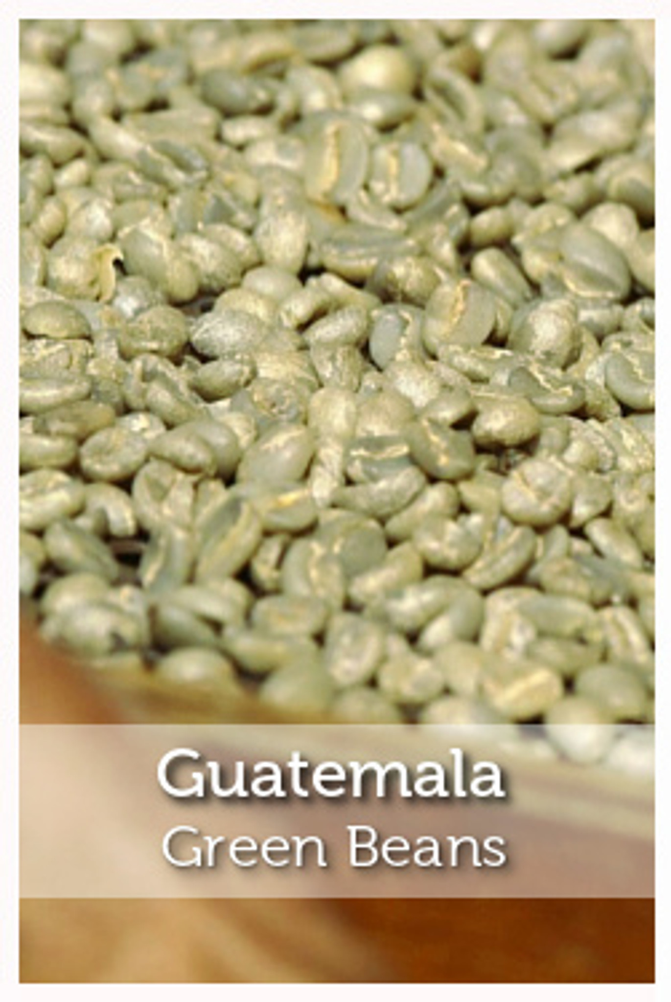 Guatemala Green Coffee Beans Fair Trade And Organic Cafe Campesino