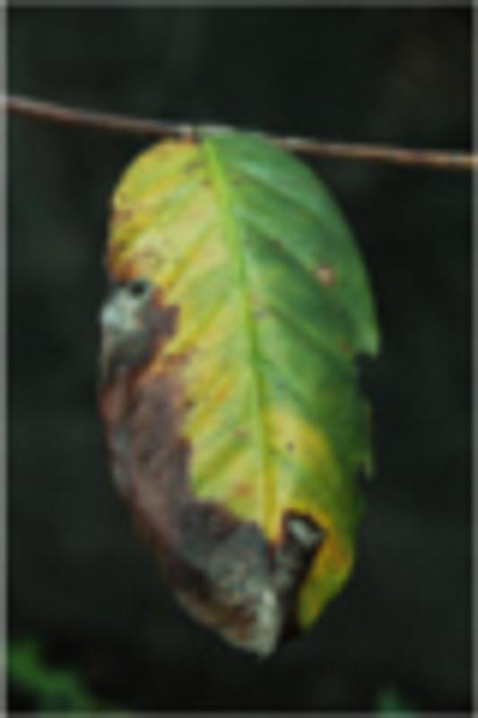 Understanding Roya: The Coffee Rust