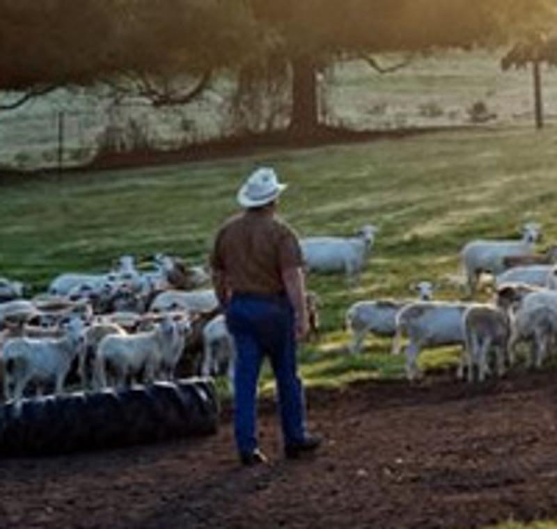 Tour De Farm Spotlight: White Oak Pastures