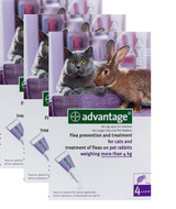 Advantage for Cats over 4 kg (over 9 lbs) - Purple 12 Doses