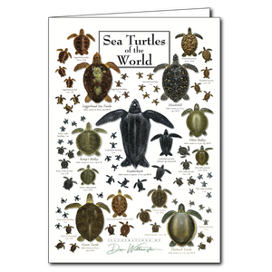 Sea Turtles of the World Card