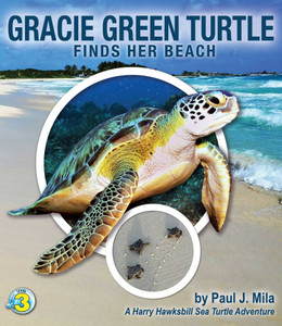 Gracie Green Turtle Finds Her Beach