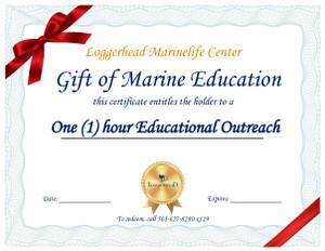 Sea Turtle Exploration Classroom Experience