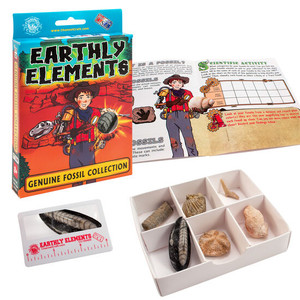 Earthly Elements Genuine Fossil Collection