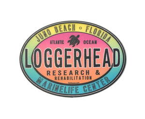 In The Water Sea Turtle LMC Sticker