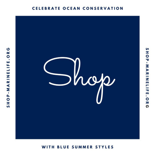 "8 Blue Items Inspired by Pantone's ""Color of the Year"" to Support Ocean Conservation"