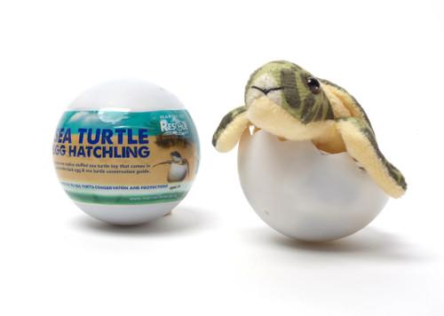 Sea Turtle Hatchling Egg