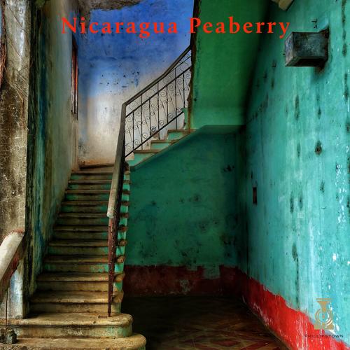Nicaragua Peaberry City/Full City