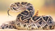 NOTICE  Rattlesnake Boots