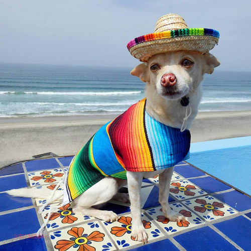 Baja Puppy Poncho with the option to personalize