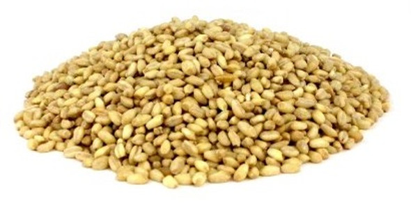 Shelled Wheat (1lb)