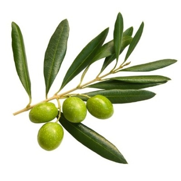 Oil Cured Pitted Olives