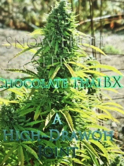 Chocolate Thai x NL akbb  Chocolate Thai x NL this backcross to the F2 Chocolate Thai female will give you 75% of the Chocolate Thais genetics but with the other 25% coming from an Indica pheno of the NL line which adds it unique old school effects. Nothing quite like it but the high is very potent, soaring, trippy and can catch you off guard if grow properly.  Chocolate Thai is a Sativa dominate strain of weed. It is perfect to wake and bake to. The smell isn't really potent, until you grind it up. Once ground, the smell is obvious and is closest to a cross between chocolates, various different types of Thai spices, and coffee. Chocolate Thai's nugs are of a darkish green color, and they are nice and dense. After smoking this strong strain you will experience a cerebral high which also leaves you feeling upbeat, creative, happy, and energetic. There aren't really any side effects, with only some people reporting cotton mouth and dry eyes.