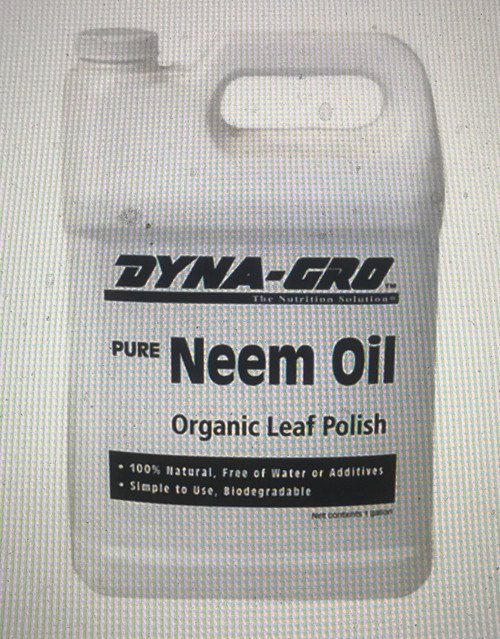 Dyna-Gro's Pure Neem Treat your plants with care that comes directly from another leafy source. Dyna-Gro's Pure Neem Oil is cold-pressed from the seeds of the Neem tree. This organic leaf polish can be used on any plant to produce clean, shiny leaves. Pure Neem Oil leaves a natural shine on leaves without clogging the stomata.