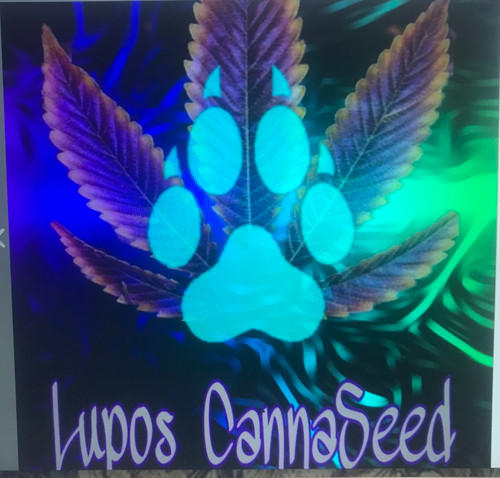 Lupo's canna seeds home to the one and only original bacon strian. quality genetics with deep flavors and amazing results