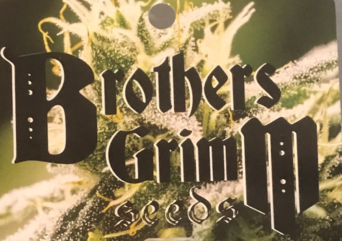"""OUR CANNABIS PHILOSOPHY Brothers Grimm takes pride in breeding cannabis seeds that never produce hermaphrodites.  When we release feminized cannabis seeds, we have done enough work to ensure they are all female with zero hermaphrodites. Brothers Grimm founder and breeder, MrSoul, is a respected and frequent speaker at major cannabis events, and his """"Feminized Seeds"""" seminar series is hugely popular.  Feminized cannabis seeds were first popularized in the 1990s. However, the breeders who produced those cannabis seeds did not present an understanding of how feminization really works. They frequently grew hermaphrodites and did not know why. Naturally, this caused a bad reputation for breeding feminized cannabis seeds.  Over the last five years, MrSoul performed painstaking research that revealed why early feminized seeds generated hermaphrodites. As a result, Brothers Grimm produces 100% female cannabis seeds that have stood the test of time in large commercial cannabis grow operations. These are also perfect cannabis seeds for the small grower who cannot waste space on males.  The dedication Brothers Grimm brings to breeding cannabis seeds was rewarded with a spot in the High Times Top Ten for our Rosetta Stone XX cannabis strain. Danny Danko said, """"MrSoul retained the beloved spicy sandalwood aroma and musky flavor of the Jack [Herer] but added resin production, stability, and yield while reducing flowering time. Unlike some poorly produced feminized seeds, these beans pop 100 percent female and grow into heavy plants that need extra support or trellising."""""""