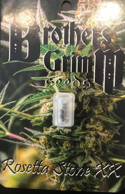 """Brothers Grimm ROSETTA STONE XX  What a joy it is to behold these sparkling colas finishing their last couple of weeks. Rosetta was created by pollinating a very special Jack Herer female with a fantastic male when we grew some P75 seeds MrSoul had stashed away. He looks like a male version of our prized seed mother called Genius. The branching pattern is identical and the floral clusters are dense like female colas. Expect wonderfully sweet, musky, incense scents with notes of jasmine & anise -the classic Jack Herer aromas and flavor along with the potent, uplifting, cerebral high that produces an adrenaline rush. It is Jack Herer but more consistent, higher yield, and faster flowering.  Rosetta Stone XX is the High Times top-rated """"Top Ten for 2018"""" for its amazing flavor and potency. We pollinated our Jack Herer 100% female with STS-induced C99 female pollen to create this 100% female version of the classic Rosetta Stone. The combination of C99's heavy resin production pushes the classic Jack Herer to new levels of potency and adds additional aromatic terpenes to an already heady recipe. What's more, you can harvest this hybrid in 9 weeks instead of the usual 12 week flowering time with the classic Jack. Expect sweet, musky, incense-scented plants with the jasmine and anise, all classic with the potent, uplifting, cerebral, energetic high. It's Jack Herer but more consistent, bigger yield, and faster flowering. TIME: 59-70 days. YIELD: Indoors/ 8 dry ounces; outdoors/only limited by the grower's style. GROW: Let these grow multi-headed or with a single dominant cola. Stake main colas; strong branches may not or may not need stakes for the heavy branches. SOG & SCROG work well, too."""