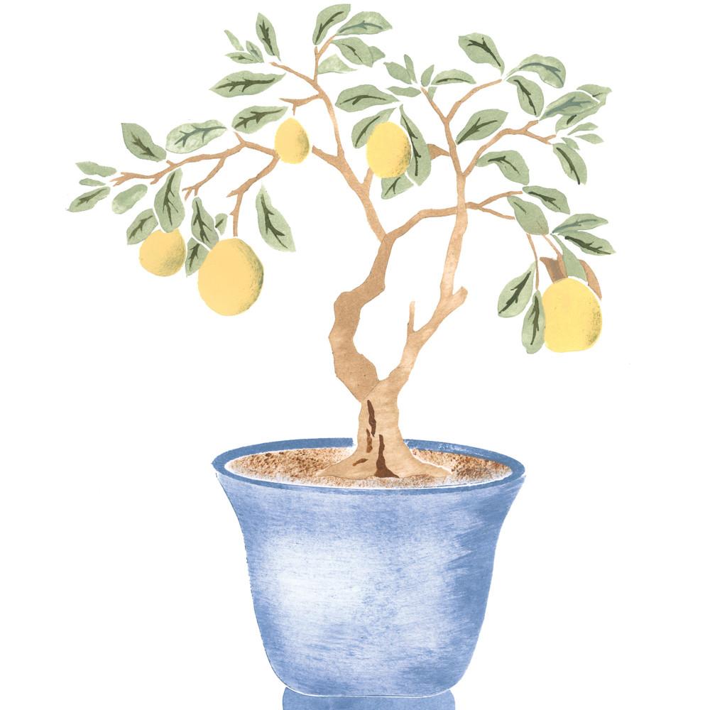 Winterthur Chinese Parlor Lemon Tree Wall Stencil