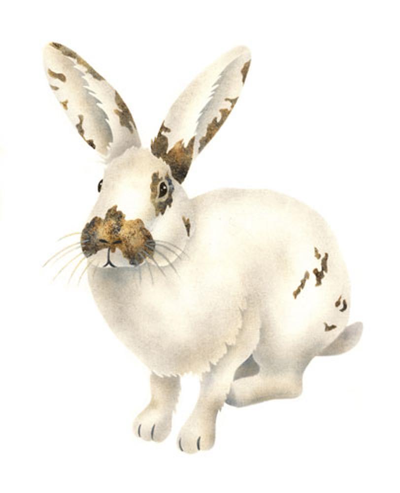 Calico Bunny Wall Stencil by The Mad Stencilist
