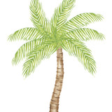 Large Palm Tree Wall  Stencil