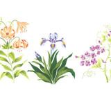 Small Lily Mix of Flowers Wall Stencil