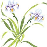 Wispy Iris Flower Wall Stencil