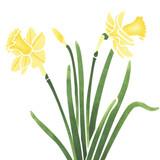 Daffodil Flower Wall Stencil