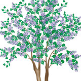 Small Lilac Tree/Shrub Wall Stencil