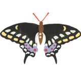 Black Swallowtail Butterfly Wall Stencil