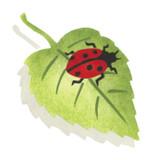 Ladybug on Leaf Wall Stencil