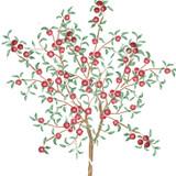 Apple Tree Wall Stencil