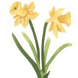 Large Daffodil Wall Stencil
