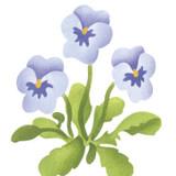 Single Pansy Flower Wall Stencil