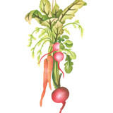 Hanging Vegetable Spray Wall Stencil