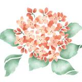 Hydrangea Blossom Wall Stencil