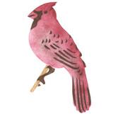 Cardinal Bird Wall Stencil