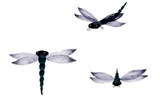 Dragonfly Trio Wall Stencil